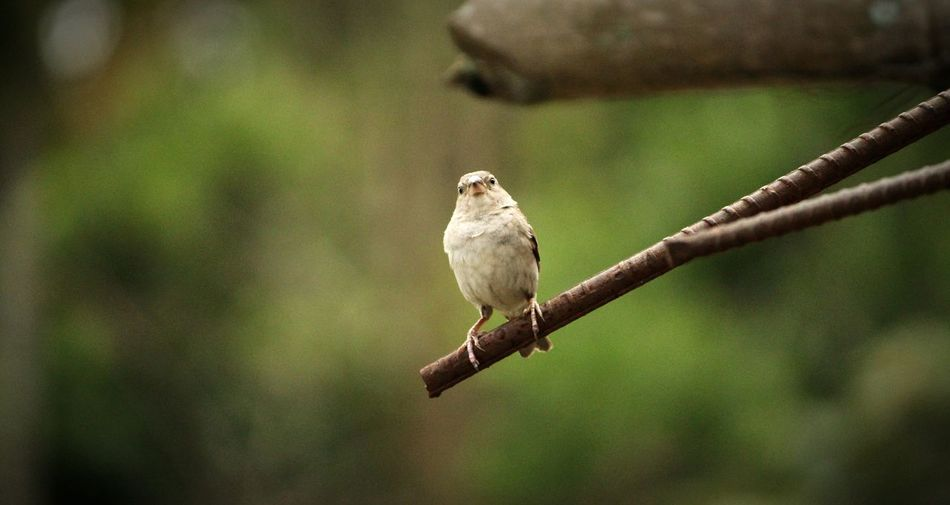 Bird Nature Beauty In Nature First Eyeem Photo Innocently Attractive