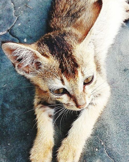 Kittens Love Capturing Dem Soo Cute At Home Sweet Home Eyemphotography