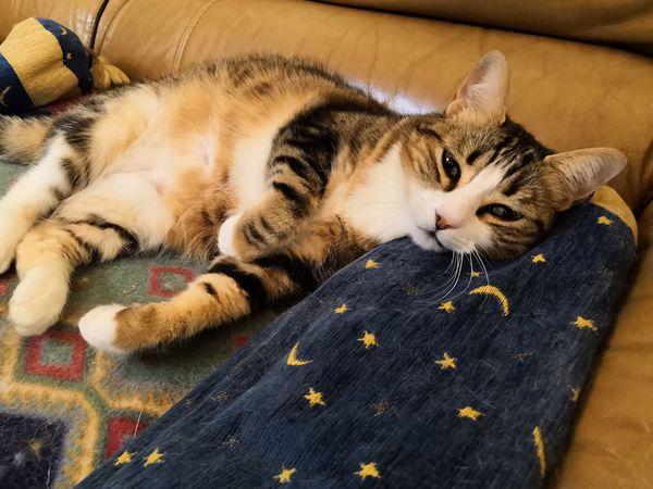 EyeEm Selects Pets Feline Kitten Domestic Cat Portrait Relaxation Lying Down Looking At Camera Sleeping Whisker