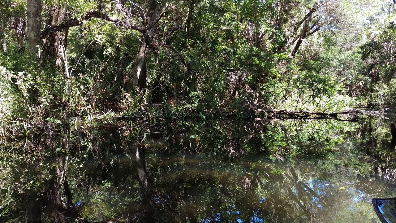 tree, nature, growth, reflection, forest, tranquility, water, beauty in nature, outdoors, no people, day, branch, tree trunk, scenics