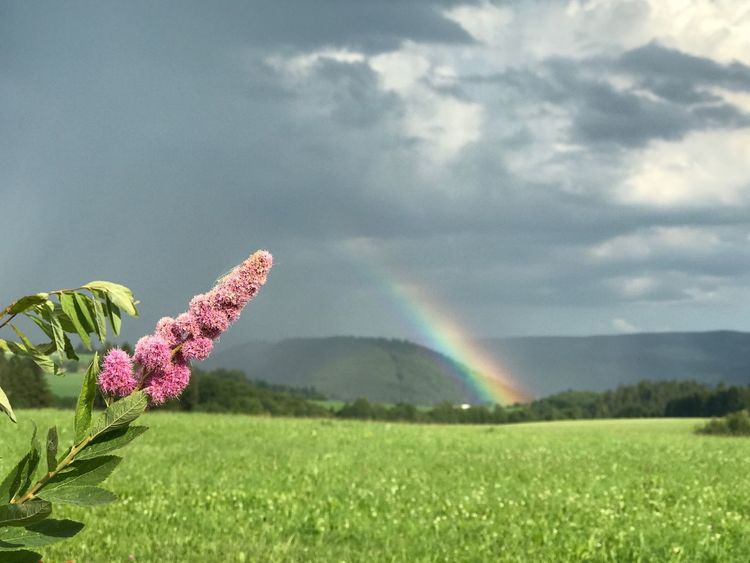 Nature Beauty In Nature Rainbow Field Day Tranquility Growth Outdoors Landscape No People Cloud - Sky Scenics Tranquil Scene Green Color Double Rainbow Sky Mountain Plant Fragility Grass