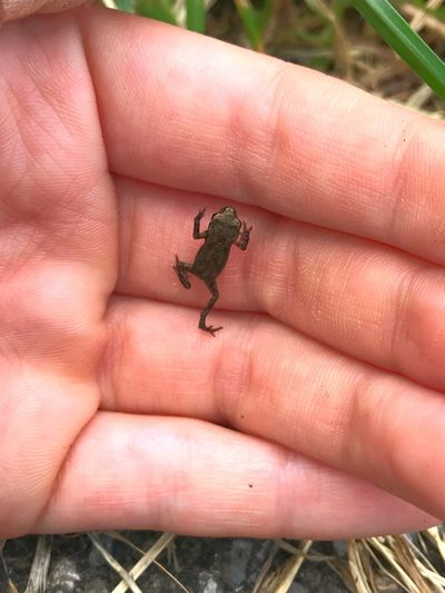 Wildlife Animal Beautiful Nature Nature Beautifullittlecreature Wonderofnature Smallestfrogever Frog Babyfrog EyeEmNewHere A New Beginning
