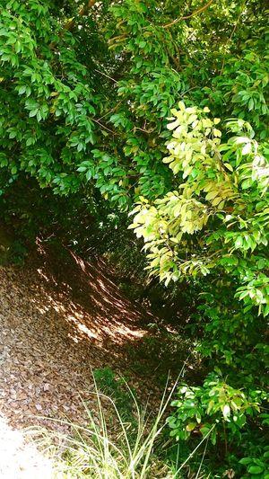 木のトンネル 木のトンネル