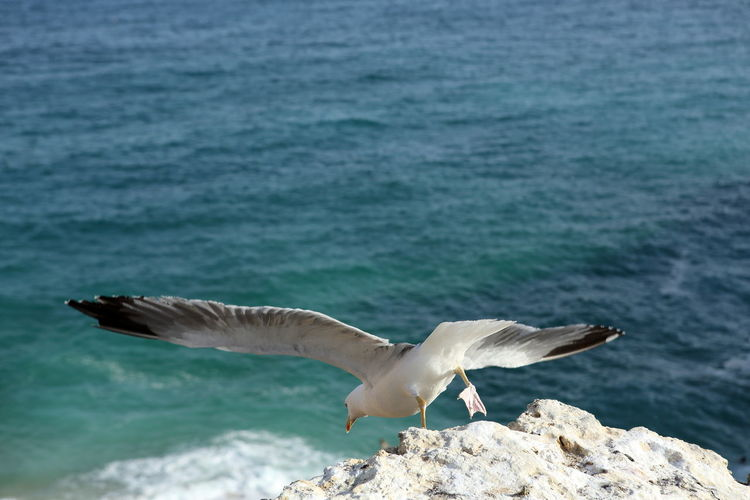 High angle view of seagull taking off from cliff against sea
