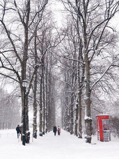 People on snow covered bare trees