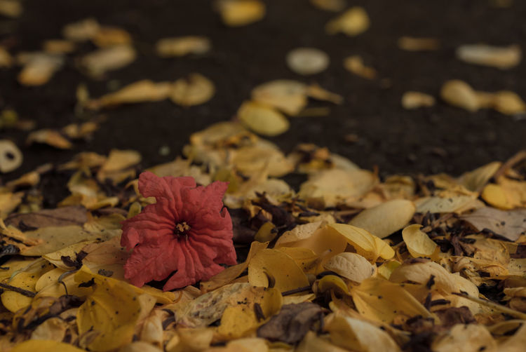 Autumn Beauty In Nature Change Close-up Flower Fragility Leaf 🍂 Leaves🌿 Nature Photography Softness Wilted Flower