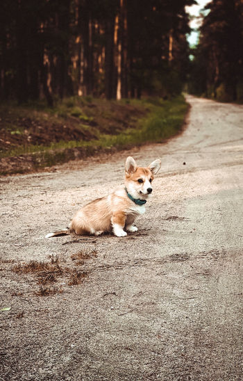Portrait of a dog on the road
