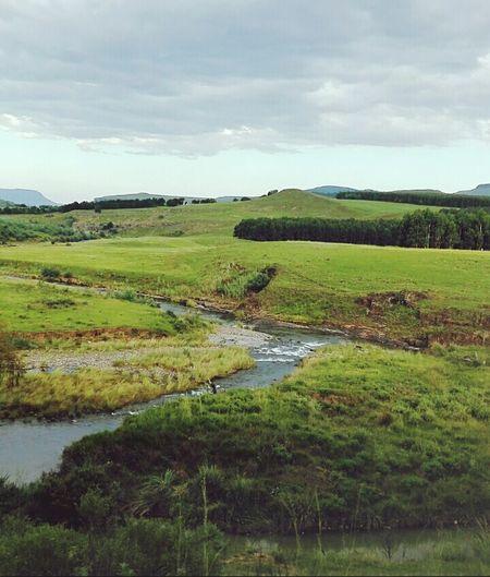 South Africa Kwazulunatal Nature Green Green Green!