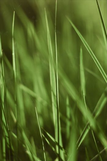 Backgrounds Full Frame Close-up Grass Plant