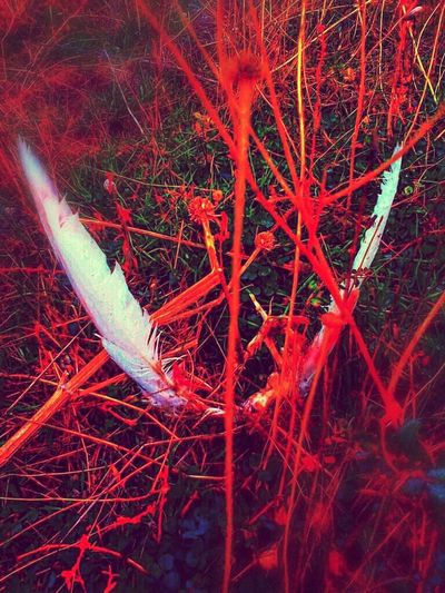 Fall angel Red Angel Angel Wings Blood Red Tree Wings Fall Fall Beauty Bird Bird Wings Birds Bird Photography White White Wings Scarry Scarry Places Death End Life No People Outdoors Nature Day Close-up