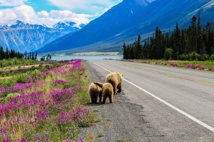 View of a bears on road