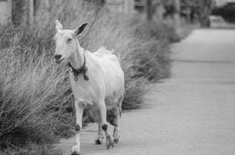 On the road eats Looking At Camera Outdoors Portrait Herbivorous Working Animal Animal Wildlife No People Day Horse Focus On Foreground Standing Vertebrate One Animal Livestock Pets Domestic Domestic Animals Animal Animal Themes Mammal