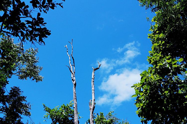 Tree Low Angle View Day Outdoors Blue Growth No People Nature Leaf Sky Beauty In Nature Plant Branch Clear Sky Freshness