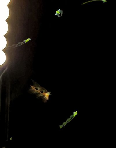Bugs In Flight Green Bugs Night Photography Blurred Motion Like Moths To A Flame Long Exposure Objects In Motion Showing Imperfection