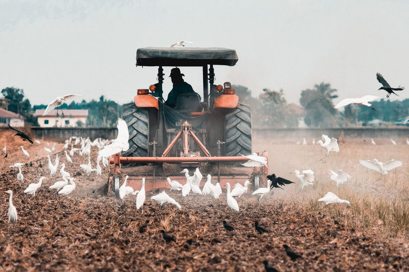 Agriculture Egrets Farmland Industry Working Adult Clothing Day Food Industry Full Length Men Mode Of Transportation Nature Occupation Outdoors Plowing A Field Real People Rear View Rice Field Sitting Transportation Water Working
