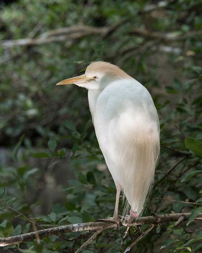 Animal Themes Animal Wildlife Beak Bird Close-up Focus On Foreground Nature No People One Animal Perching