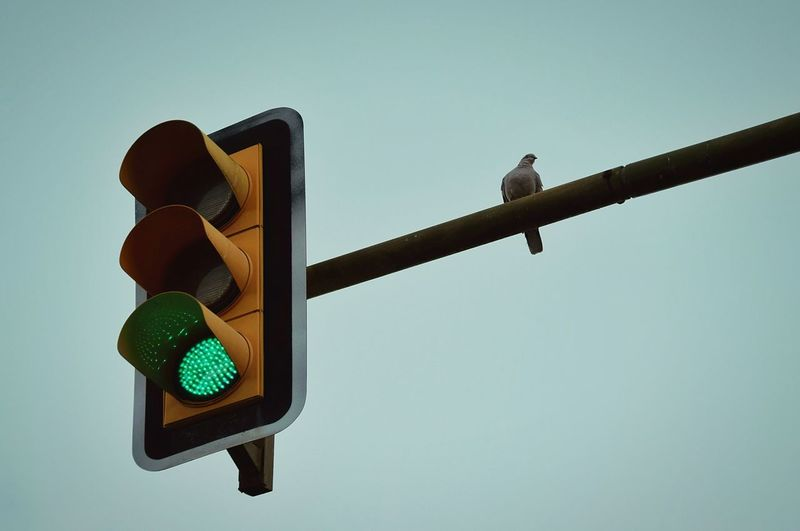 Winter No People Bird Outdoor Stoplight Road Sign Green Color Safety Day