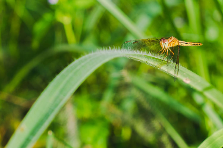 Animal Animal Themes Animal Wildlife Animals In The Wild Beauty In Nature Blade Of Grass Close-up Day Focus On Foreground Green Color Growth Insect Invertebrate Leaf Nature No People One Animal Outdoors Plant Plant Part Selective Focus