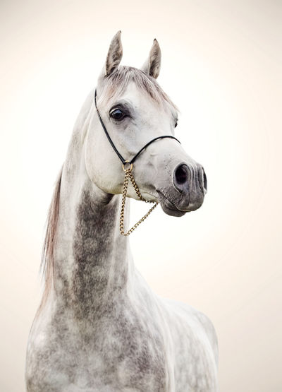 Animal Animal Themes Close-up Day Domestic Animals Horse Livestock Mammal No People One Animal Outdoors