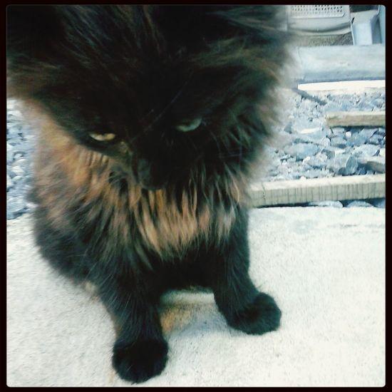 Cat ♡ Cat Kitten First Eyeem Photo
