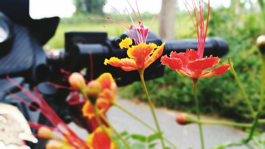 :) smiling flower
