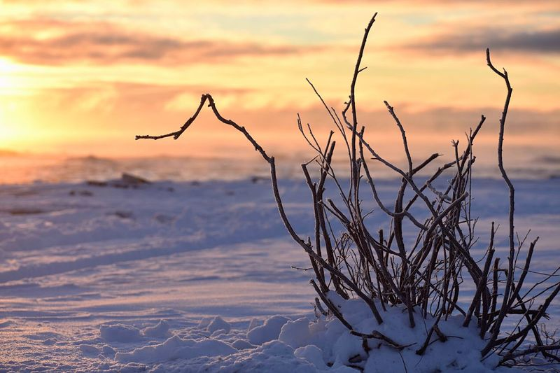 Bare tree on snow covered land against sky during sunset