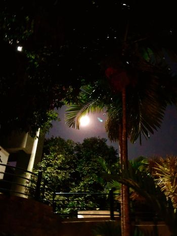 Tree Palm Tree Night No People Low Angle View Illuminated Nature Beauty In Nature