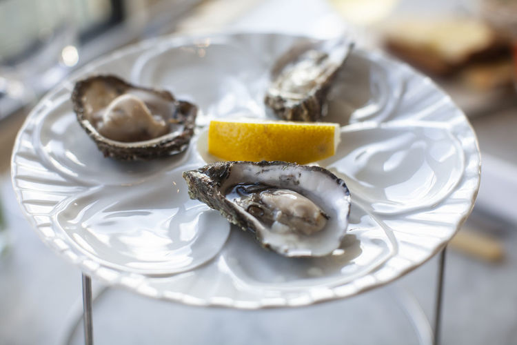 Close-up of oysters served on table
