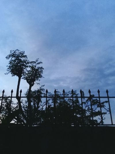 Being lost in ValenzuelaPhilippines Calming Image Cloud - Sky Nature Tree Outdoor Photography Dawn Sunset Sky First Eyeem Photo