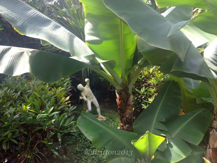 Nature_collection Surrounding By Tropical Plants