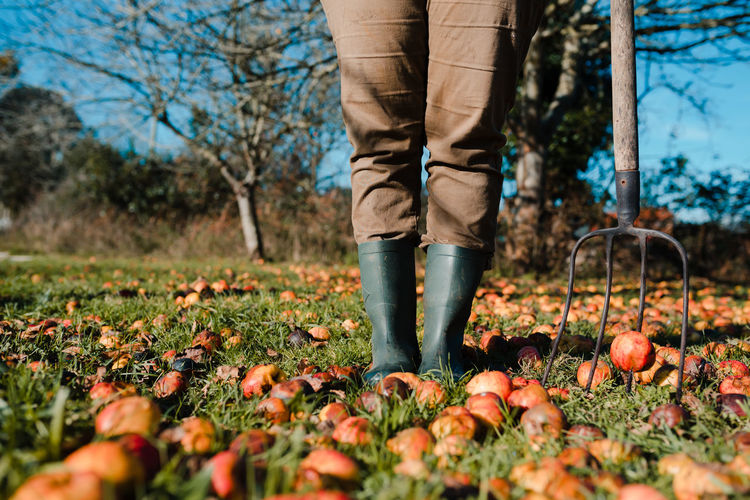 Low section of person standing on field during autumn