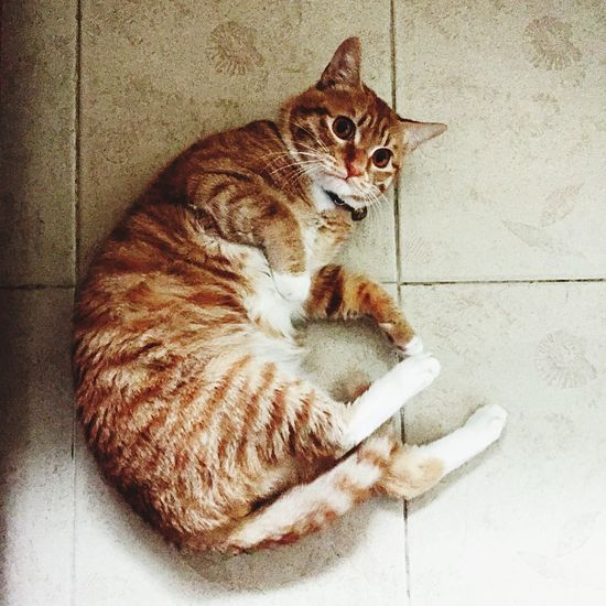 Cat Enjoying Life Life Home Guangzhou Love Check This Out