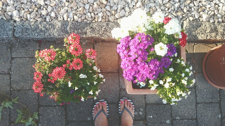 Flowers Feet From My Point Of View Summertime Fromabove Colorful Colourful Nature Fromwhereistand Stone Flipflops Sunset Home Sweet Home Garden Photography Outside My House