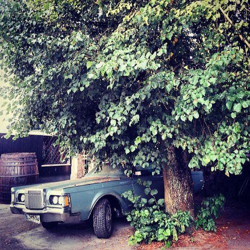 Oldschool Car under the Tree
