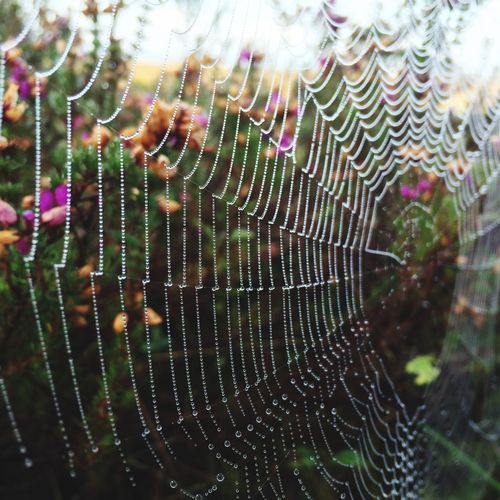 piders Web with Due Autumn Spider Spiderweb Morning Due Waterdrops Hedge