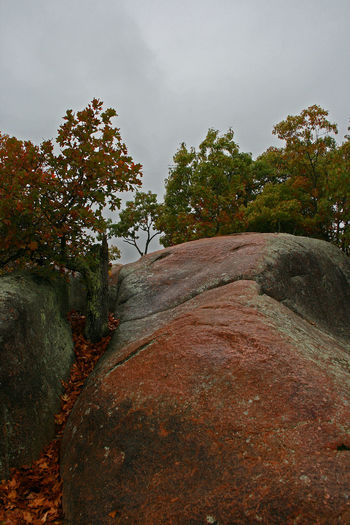 Autumn Elephant Rocks Fall Beauty Granite Rocks Beauty In Nature Day Elephant Rocks Fall Field Granite Growth Landscape Nature No People Outdoors Scenics Sky The Way Forward Tranquil Scene Tranquility Tree Trees Growing Between Rocks