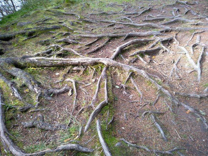 High angle view of tree roots