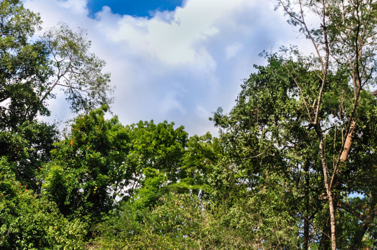 No Filter Tree Trees And Sky Eye4photography  Beauty In Nature Beautiful Beauty Clouds And Sky Trees And Clouds EyeEm Best Edits EyeEm Best Shots EyeEm Nature Lover EyeEm Best Shots - Nature EyeEm Gallery EyeEmBestPics