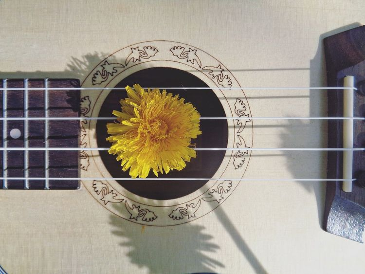 Strings of summer Ukulele Ukulele Lover Ukulele Time Summer Time  Ukulelelove Summer Dandelion Dandelion Flowers Musical Instrument Music Strings Strings Of Music Beauty No People Flower Fotorus Beautiful EyeEm Best Shots Eye4photography  Yellow EyeEm Gallery Eyeem4photography Journeyphotography Eyephotograpy