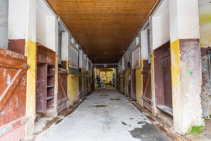 Box Ceiling Farm Farm Life Wooden Ceiling Agroculture Architecture Brown Built Structure Corridor Day Farming Go-west-photography.com Horse Horse Stables Horse Theme Indoors  No People Shedrow