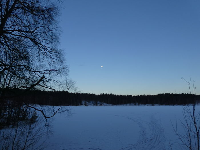 Late afternoon walk, watching the almost full moon. Moon Nature Dailywalk Sognsvann Lake Frozen Lake Natureaddict Bluehour Blåtime Bauty In Nature Nature_collection Natureza Naturelover Snow Outdoors