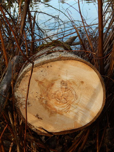 Cut Tree Beauty In Nature Circle Close-up Colors Cross Section Day Deforestation Detail Forest Lake Log Lumber Industry Nature No People Outdoors Sky Timber Tree Tree Ring Tree Trunk Up Close Water Wood Wood - Material WoodLand