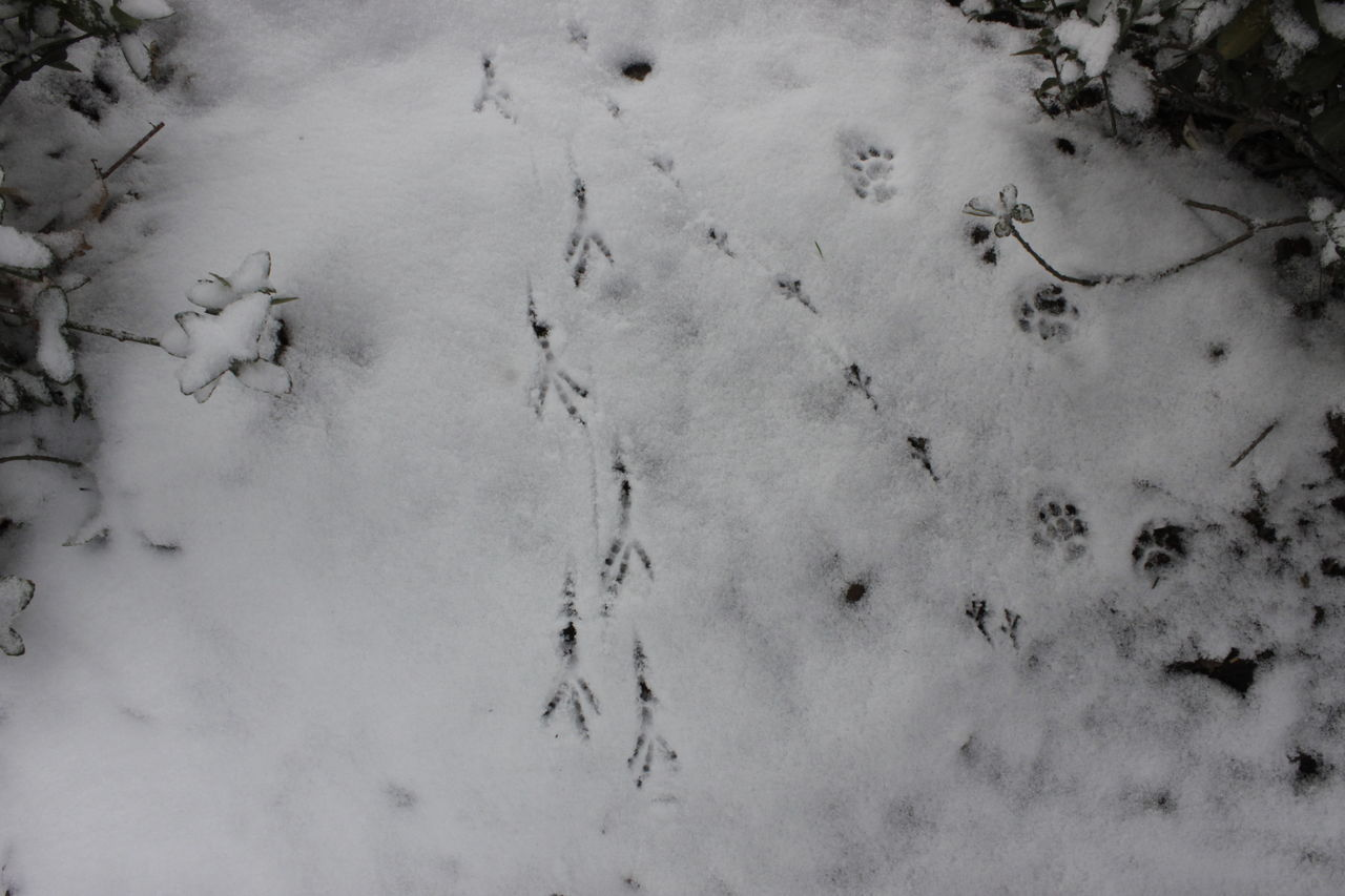 cold temperature, winter, high angle view, snow, paw print, animal track, nature, weather, no people, day, outdoors, directly above, animal themes, mammal