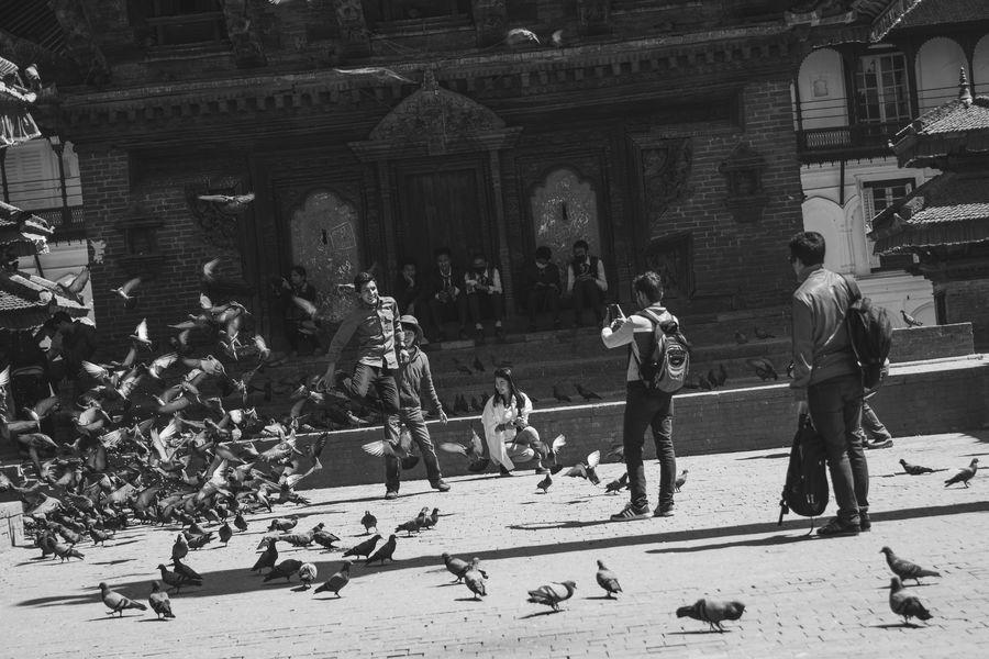 Nepal Katmandu 2015  Pigeons Blackandwhite Travel Happy