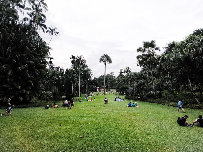 Botanic Garden Tree Grass Real People Green Color Leisure Activity Growth Nature Men Sky Field Large Group Of People Playing Outdoors Park - Man Made Space Lifestyles Day Palm Tree Playing Field Beauty In Nature Landscape