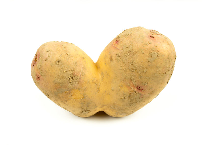 Conjoined Siamese potato. Wonky / ugly / funny vegetable or food waste concept Wonky White Background Vegetables Vegetable Ugly Fruit Spud  Siamese Potatoes Muddy Joined Healthy Eating Genetic Modification Genetic Engineering Food Farm Waste Dna Conjoined Agricultural Waste Vegetarian Ugly Potato Home Grown Genetically Modified Funny Food Waste EyeEmNewHere Food Stories