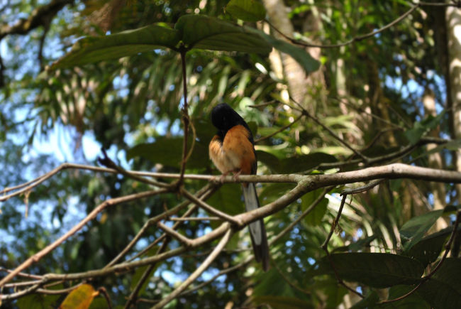 Animal Themes Animal Wildlife Animals In The Wild Beauty In Nature Bird Branch Day Growth Leaf Low Angle View Nature No People One Animal Outdoors Perching Tree