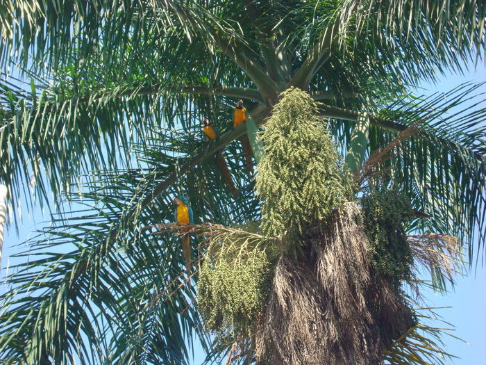 Guacamayas on palm Animal Themes Animals In The Wild Beauty In Nature Bird Nature Palm Tree Perching Birds