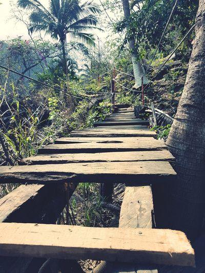 Bridge Sunlight Nature Day Tree Shadow Vallarta,Mexico