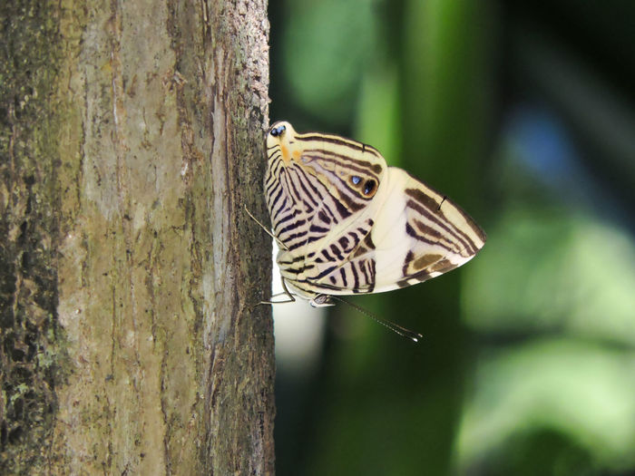 Close-up of butterfly perching on tree trunk